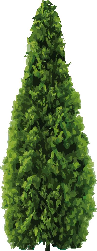 arbol-tepozan