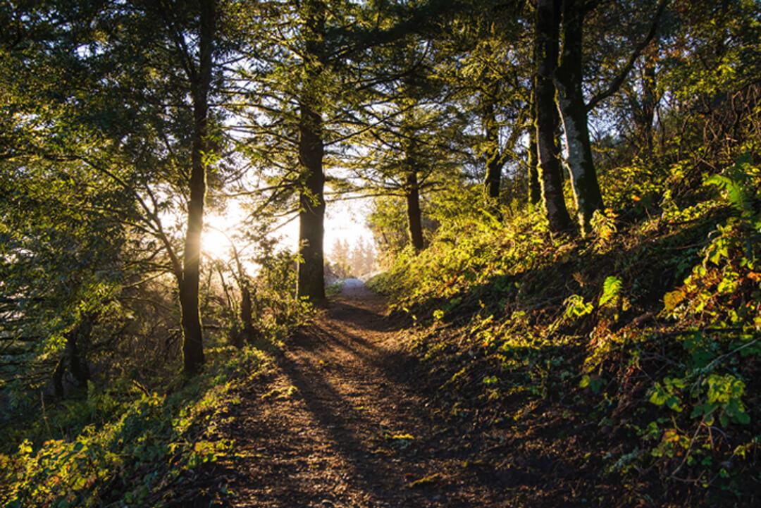 acerca-del-bosque